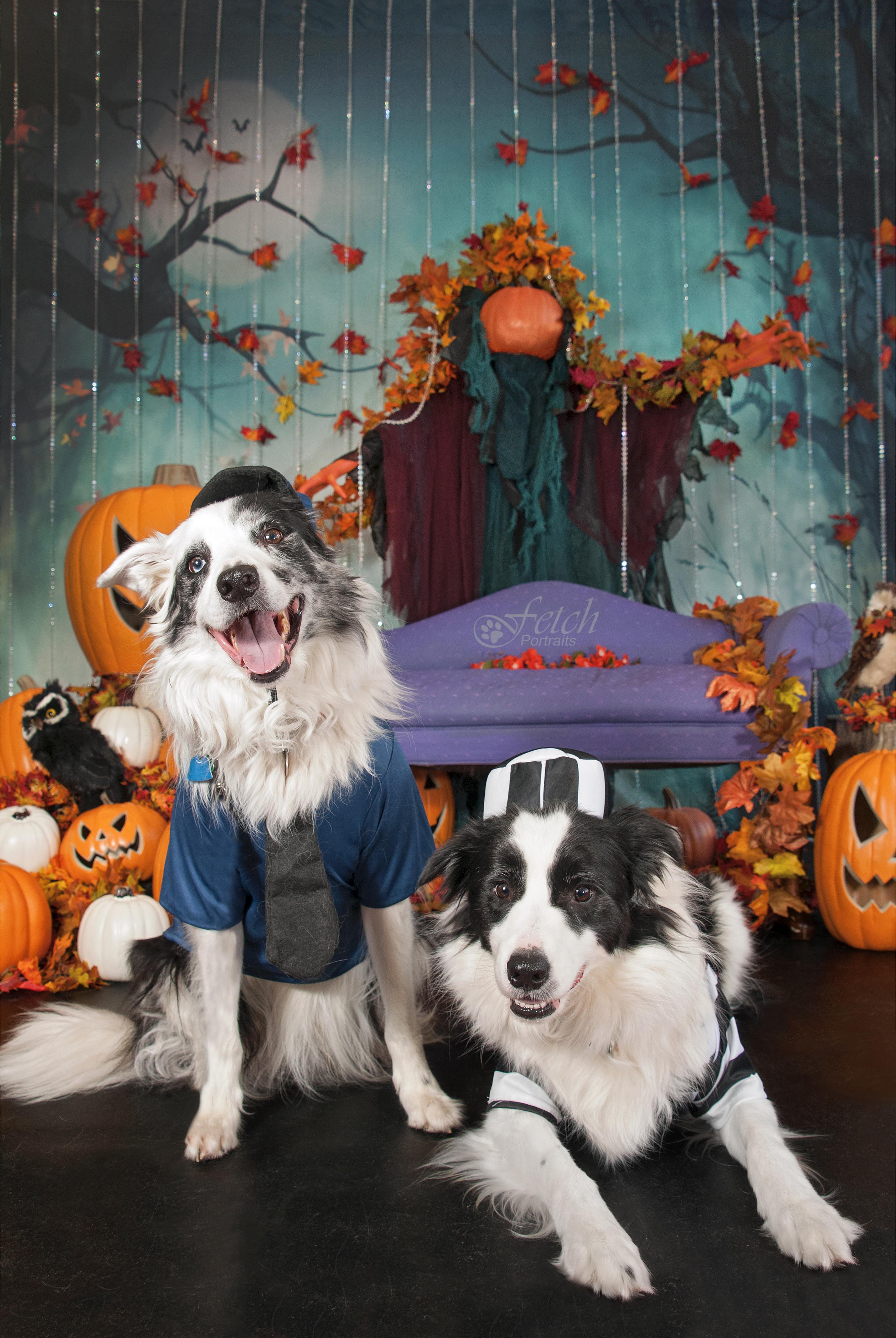 fetch-portraits-halloween-kpr-2019-515