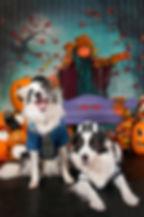 fetch-portraits-halloween-kpr-2019-515.j