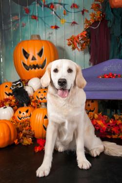 fetch-portraits-halloween-kpr-2019-254