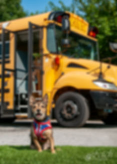 bus_test-5849_ad.jpg