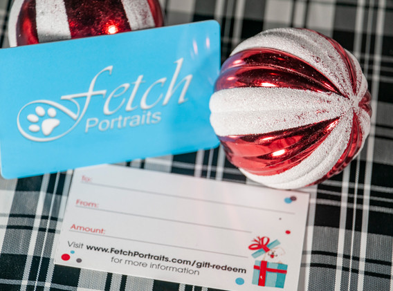 Fetch Portraits Howliday Certificate6