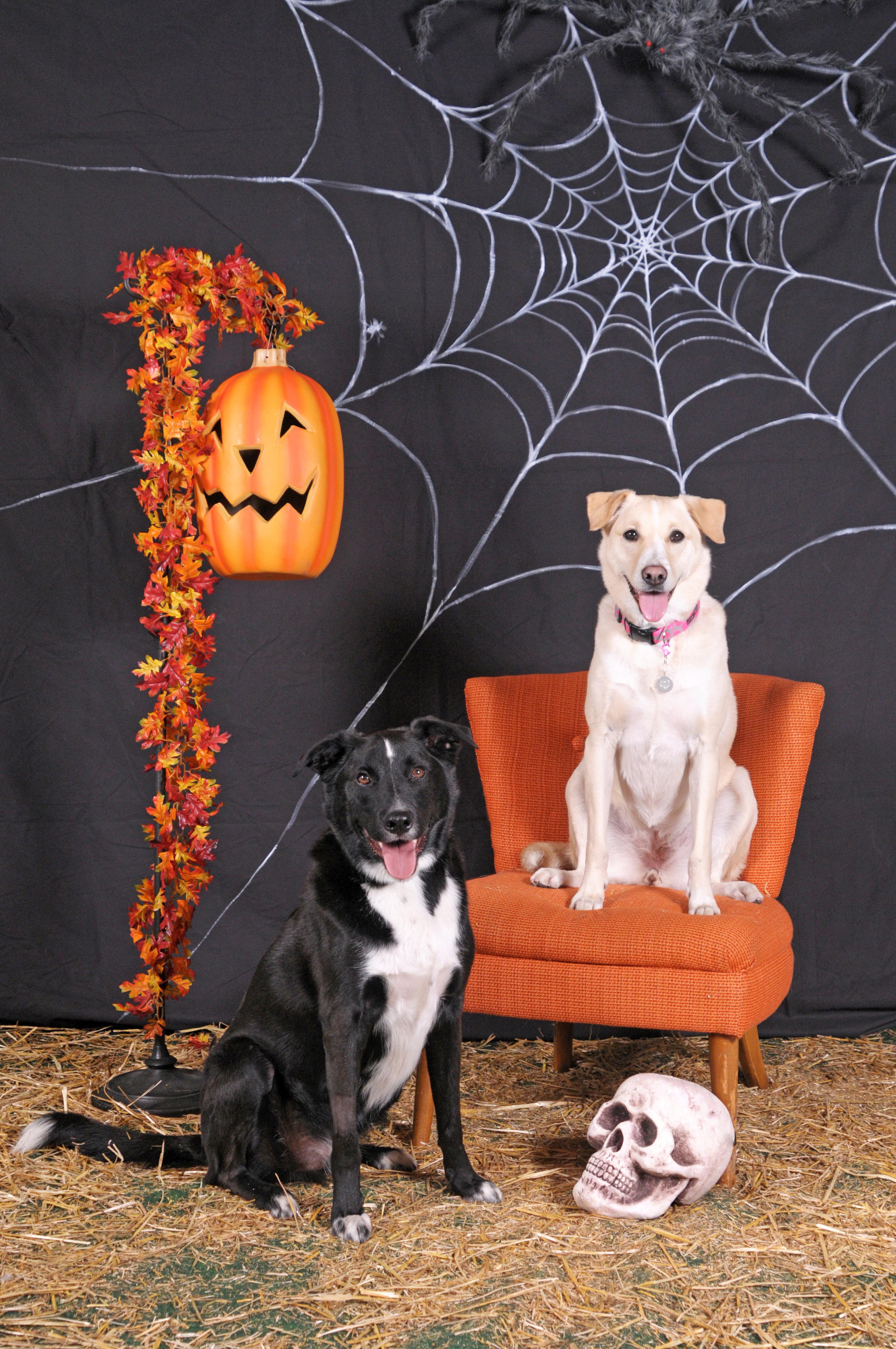 Dogaholic's Halloween 2013 111