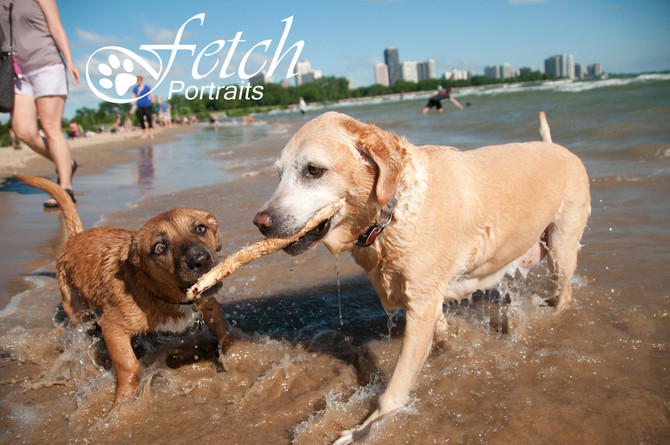 Beat the Heat in August! Beach Photo Sessions for your Pup(s)...