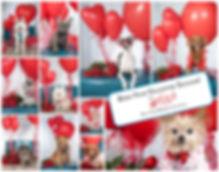 valentine2019collage_poster.jpg