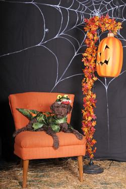 Dogaholic's Halloween 2013 156