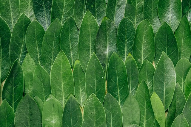 small-leaves-arranged-in-rows