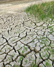 The Importance of Soil for Climate Change Mitigation: Soil Health & Carbon Sequestration