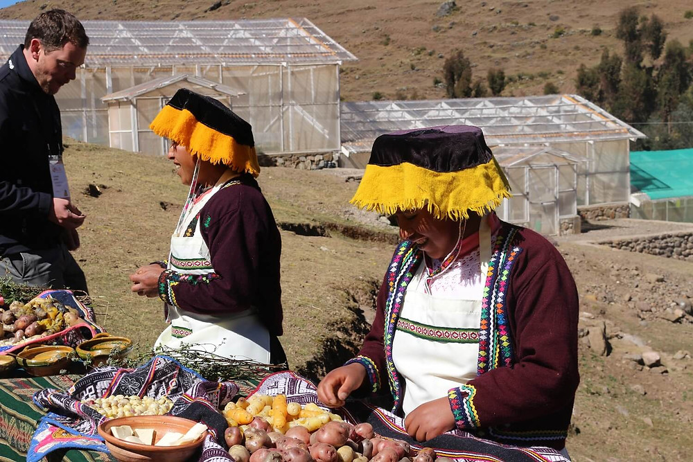 andean-communities-peru-potatoes