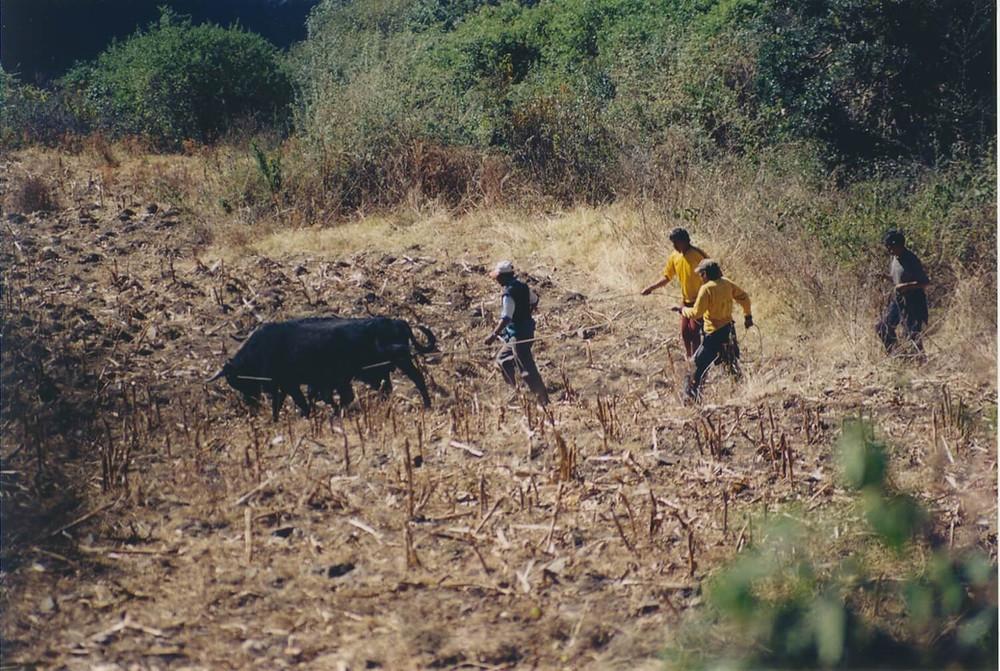 agricultura-tradicional