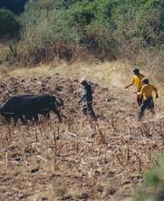 El Parque de la Papa: Rescatando la Agricultura Tradicional en el Perú