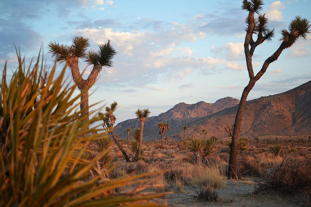 desert-scene-united-states