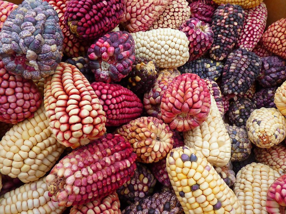 peruvian-corn
