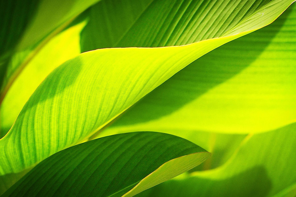 green-leaf-macro