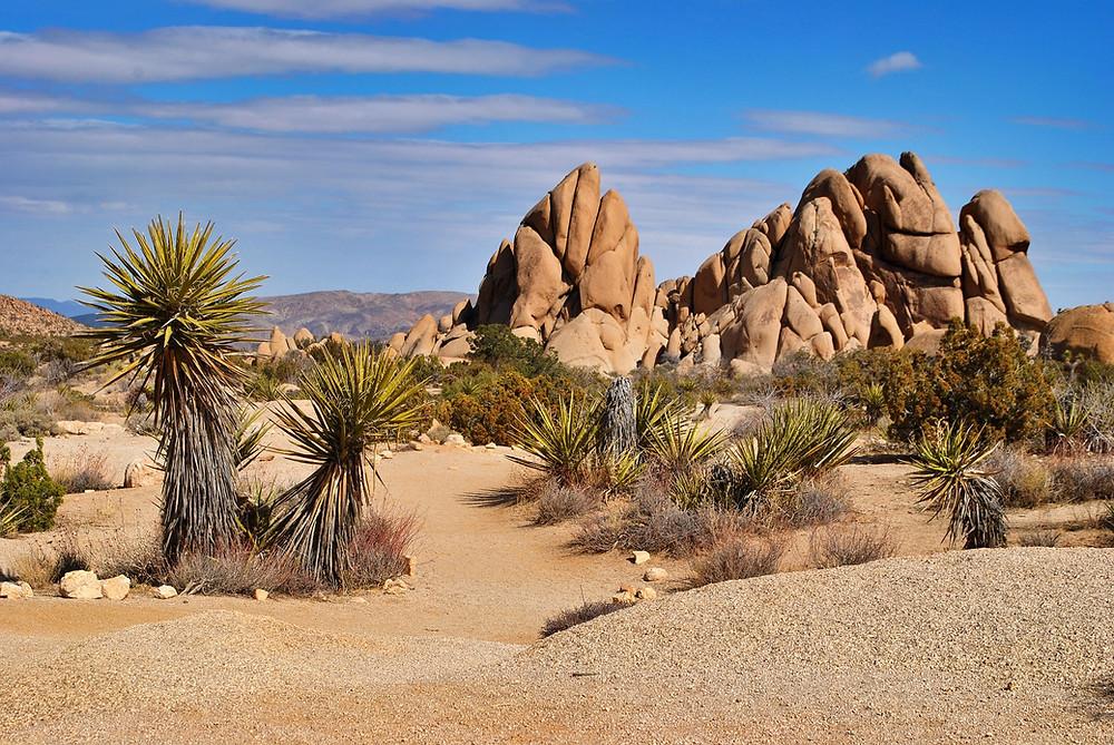yucca-desert-landscape