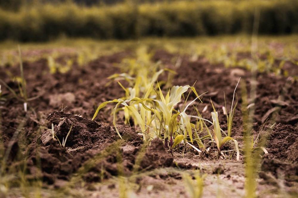 growing-plants-in-soil