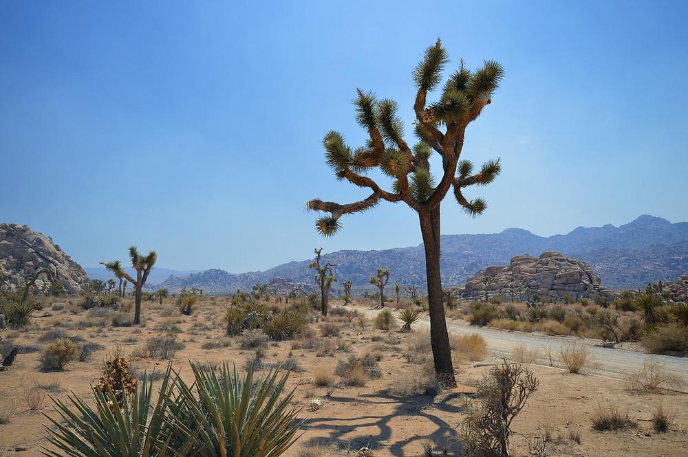 mojave-desert-scene