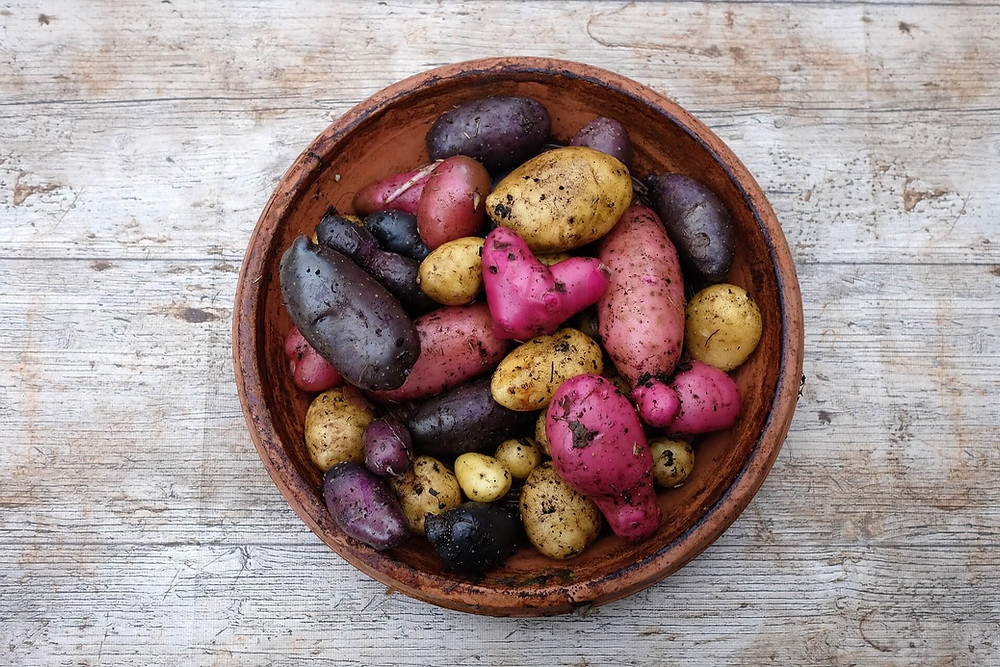 bowl-multicolor-potatoes