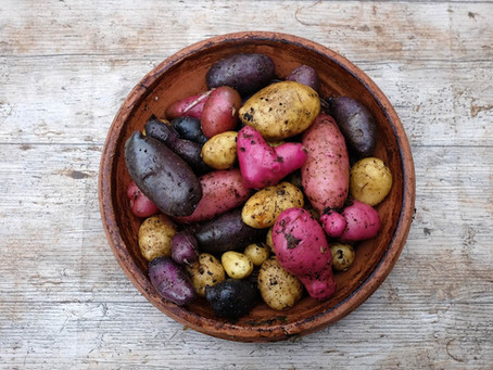 Peruvian Potatoes: From Chuño to French Fries