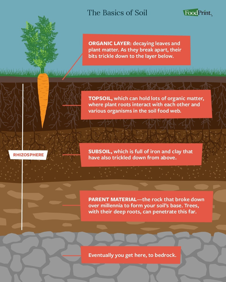 what-is-soil