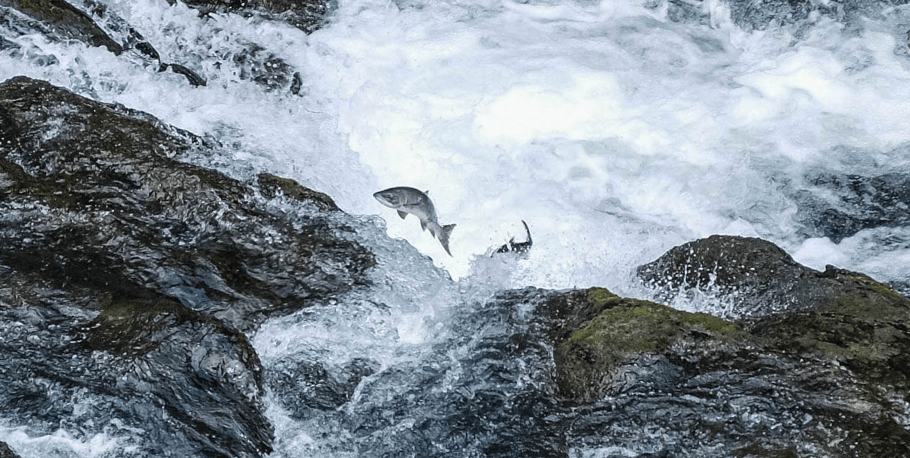 climate-change-in-the-north-salmon