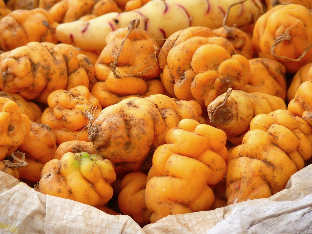 peruvian-potatoes-oca