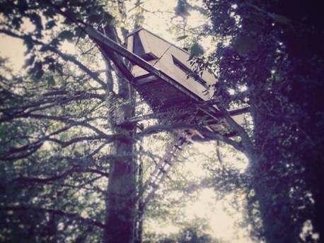 """Namelių medžiuose praktika """"Bauraum"""" studijoje"""