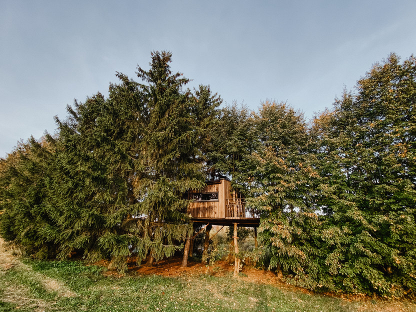 Paukščių namelis medyje