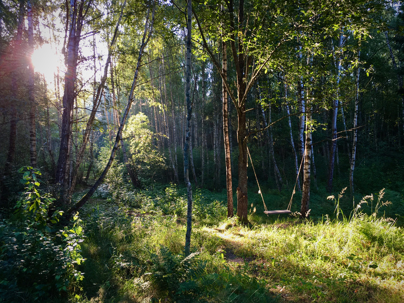 InWoods miškas aplink