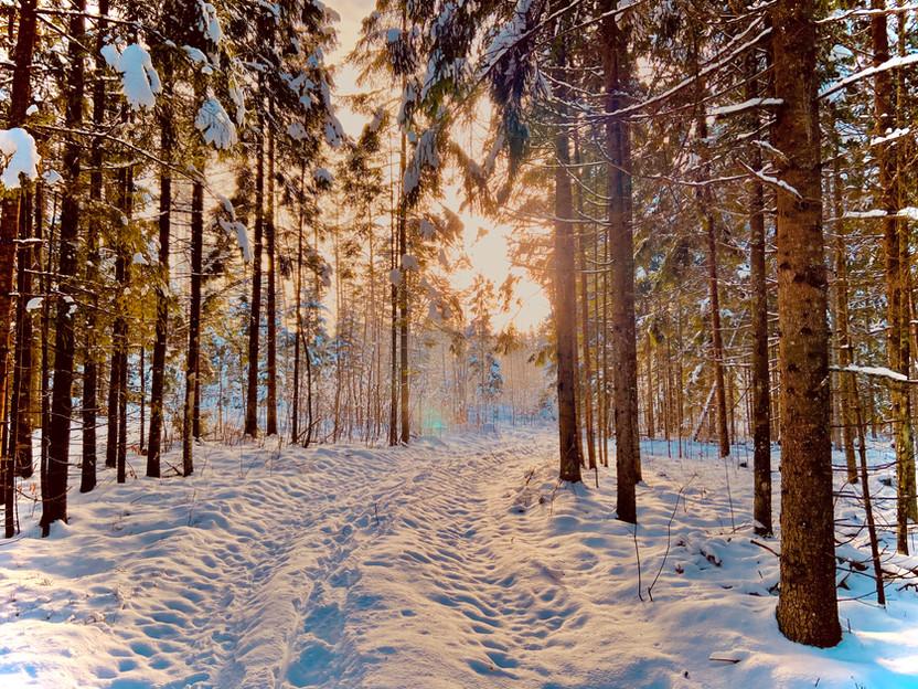 InWoods žiema