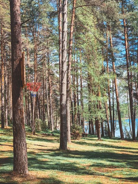 Asalnų stovyklavietė - miškas