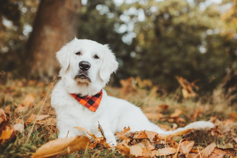 dog photographer in sheffield yorkshire3
