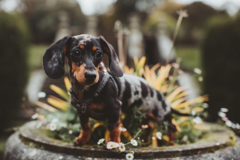 dog photographer in sheffield yorkshire5