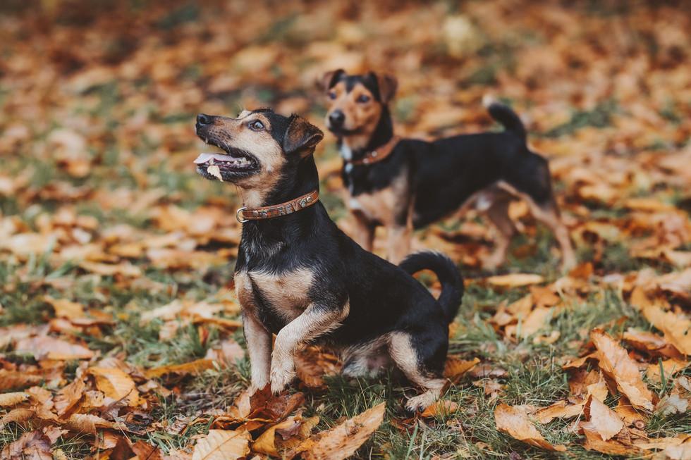 dog photographer in sheffield yorkshire1