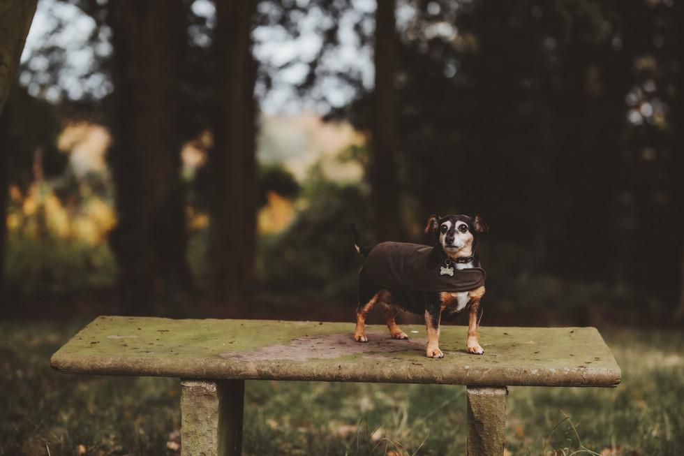 dog photographer in sheffield yorkshire2