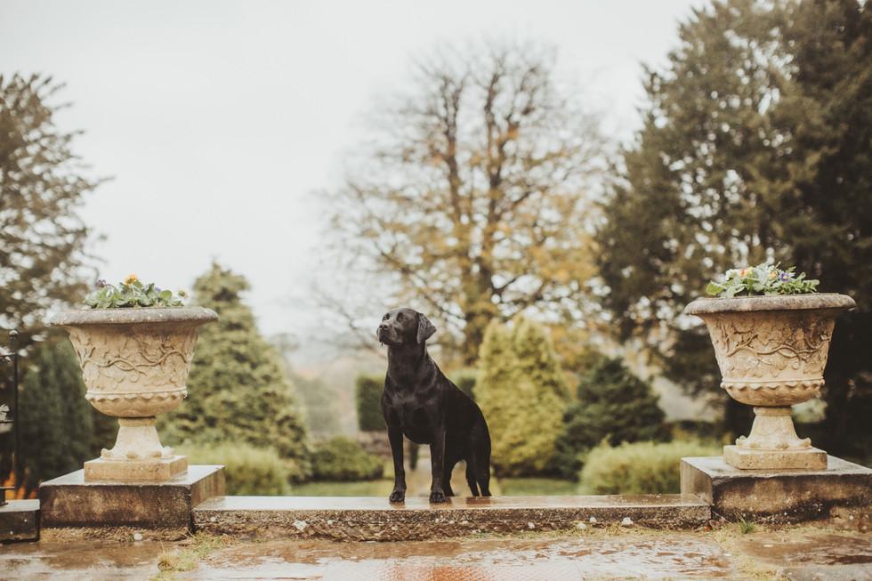 dog photographer in sheffield yorkshire7