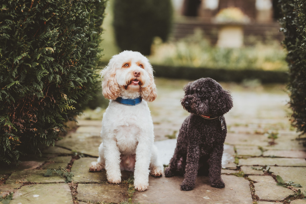 dog photographer in sheffield yorkshire4