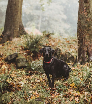 dog photographer in sheffield yorkshire6