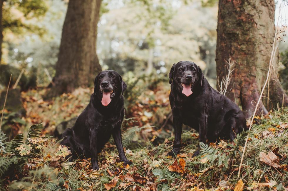 dog photographer in sheffield yorkshire9
