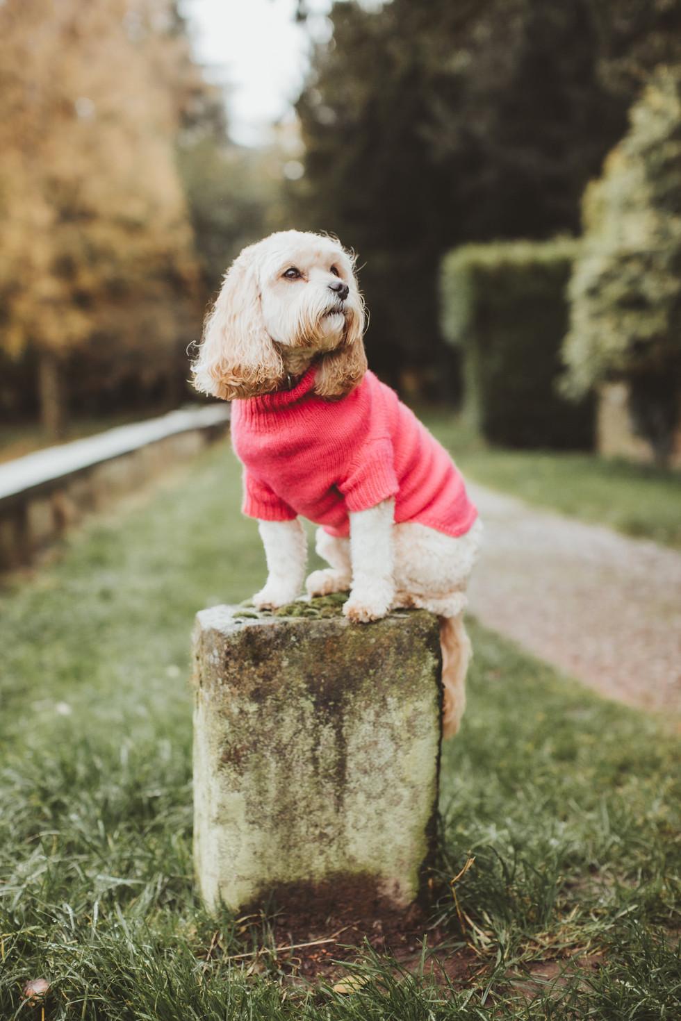 dog photographer in sheffield yorkshire8