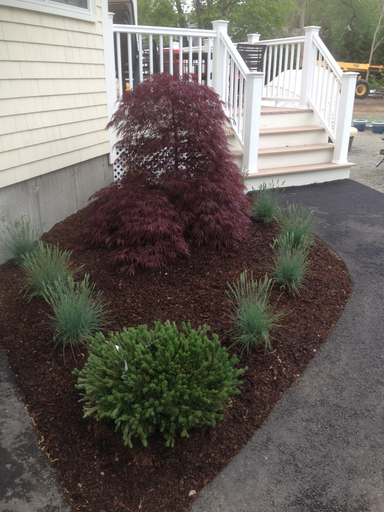 Foundation/Entry Plantings