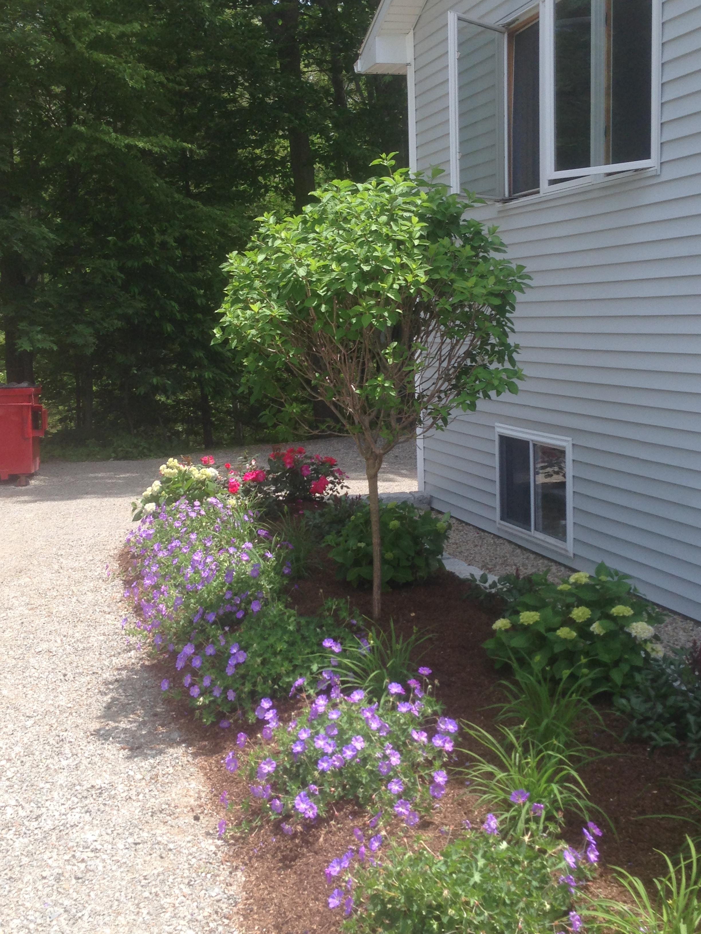 Walkway/Foundation Plantings
