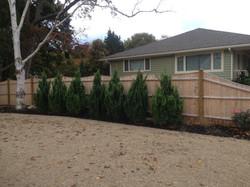 Plantings Juniper Hedgerow