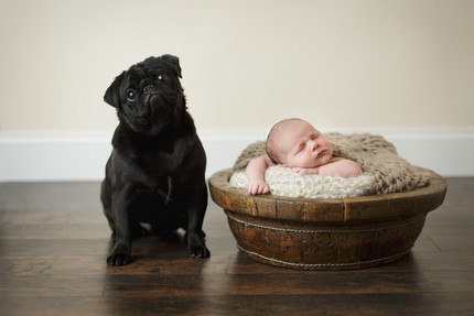 Newborn photographer, baby photography, infant photography, newborn boy, cream wrap, newborn posing ideas, black pug, basket