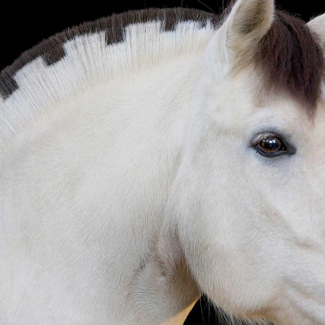 IMG_1189 horse.jpg