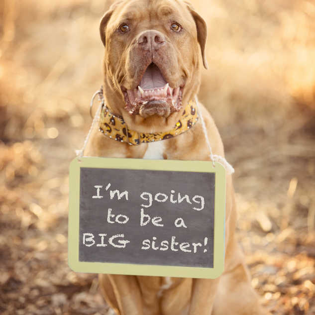IMG_8910im going to be a big sister.jpg