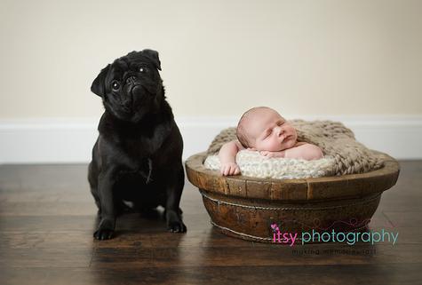Newborn photographer, baby photography, infant photography, newborn boy,  brown blanket, wooden floor, wooden bowl, black pug, dog, puppy