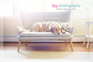Family photographer, baby photographer, dog, in home, window light,  couch
