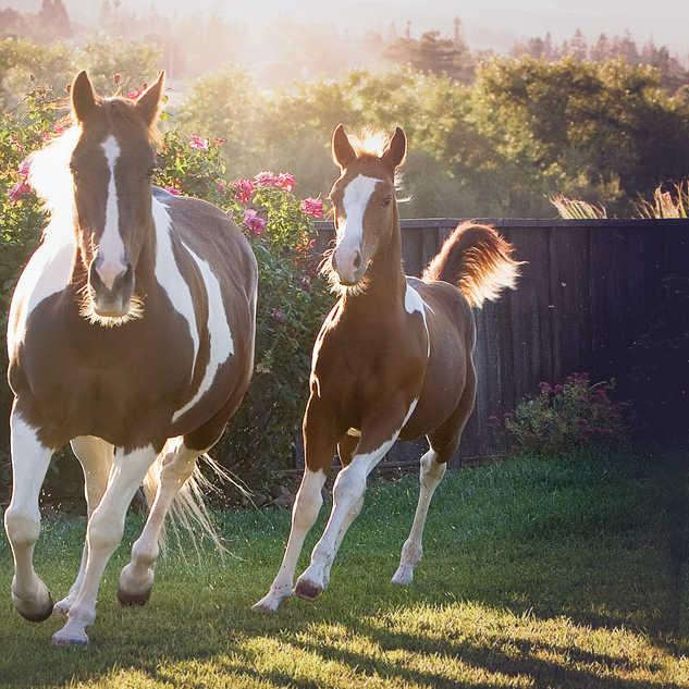 IMG_1165 horses smaller file.jpg