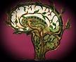 growth.brain.JPG.png