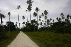 The main road